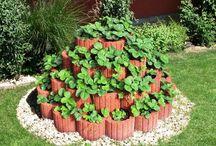 Zahrada / zahrada užitková i dekorační