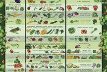 Vegetable Gardening / Organic Vegetable Gardening