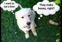 Doggies / Ultimate cuteness, including my puppy Daisy