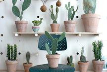Cactus / Little Sanctuary