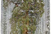 Tree / #paisagem #arvore #natureza
