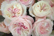 Wedding Flowers - Sally