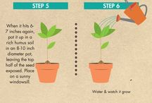 Plant growing plan