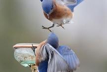 birds /birdbaths