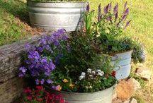 my  future garden:) / gardening