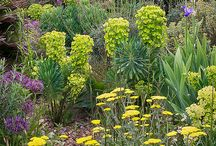 Dry Gravel Mediterranean Garden