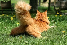 """Cats / """"The cat said I'm dismissive and sarcastic.  What does he know?  He's only 10"""" tall.""""   / by Karen Schechterle"""