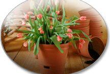 Inside plants / by Shirley Weeks