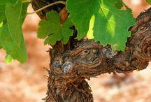 Marisol Rosé © / un rosé sans alcool, histoire d'alterner, bientôt disponible sur le net à l'adresse www.marisol.vin