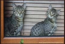 Franek and Puma