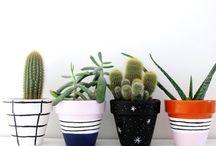 Cserepek, Növények
