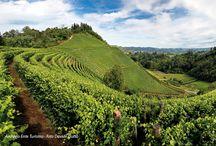 Langhe Roero e Monferrato - Patrimonio Mondiale dell' UNESCO / Un paesaggio unico, nel cuore del Piemonte! Riconosciuto Patrimonio mondiale dell'UNESCO nel 2014.