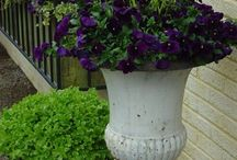 Container Design - Spring / Successful plant combinations for spring containers / by Grace Hensley @ eTilth