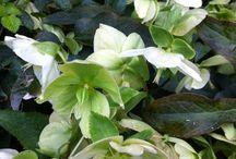 Fiori e piante del mio giardino