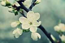 Seasons / Spring time