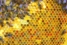 Beautiful Bee Photos