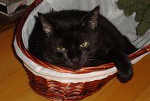 gatto nero / Amelia