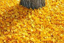 Colour - Yellow