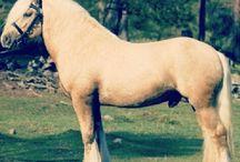 horses / Horse pic