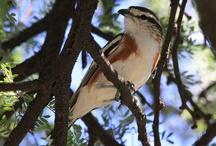 Birds XVII / by Charlie Glez