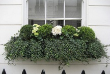 Window boxs / Winter Containers / outdoor / Container Gardens