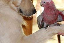 przyjaciele psy