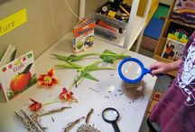 ECE Nature Tables / bringing nature indoors in early childhood settings / by Jennifer Kable