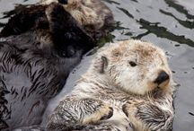 Otters, hedgehogs, and other various animals