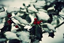 xmas + winter / trees + lights + snowy days + presents + delicious dishes + decorations + winter celebrations / by Jennifer Diane