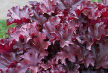Patio Flowers