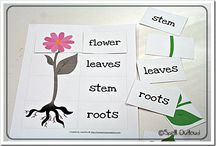 plants / by Lisa Andresen Swanston