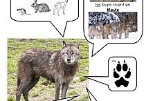 Loups / Le loup dans tous ses états