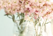 Floral Arrangements / Beautiful flowers of all kinds arranged in various vases. / by Candy Spelling