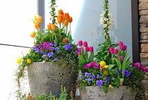 spring ws