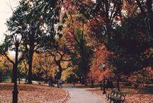 An Autumnal Affair