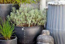 Hage - potter, terrasse