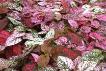 House Plants - Colorful