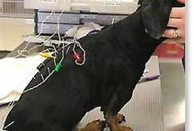 Animal acupuncture