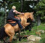 Rund ums Pferd