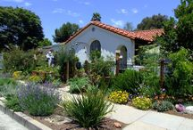 California Native Plants / by Marsha Davies