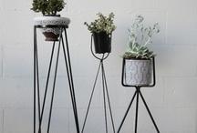 Interior Design | Plants