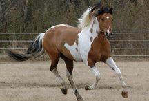 Moje koňská stáj