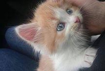 Kittens/Cats❤️