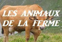 Teaching: animals