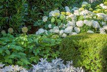 schaduw / planten