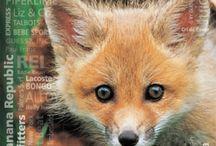 Fur Free !!! - Don`t Abuse Animals ! / Fur Free !!! - Don`t Abuse Animals !