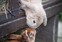 Bunnies and rabbits