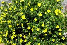 Perennial Flower Garden / by Delana Winchester