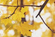 Jesien , zima