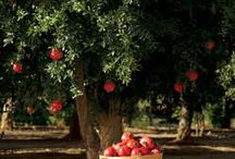 Family Orchard